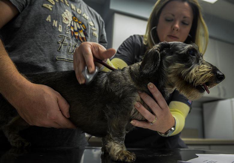 perro enfermo en la consulta del veterinario