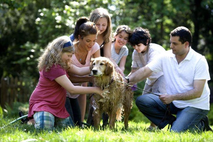 Perro disfrutando con toda la familia