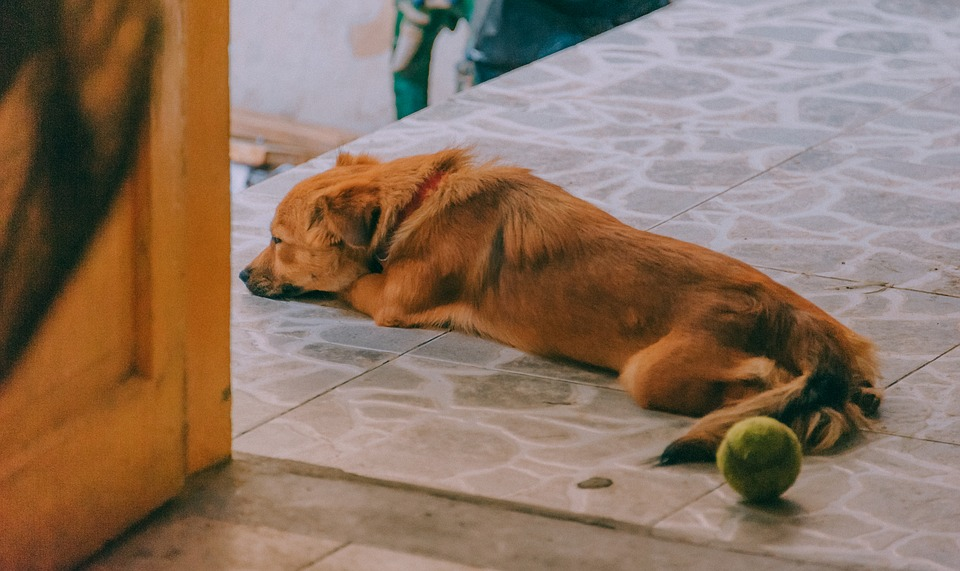 perro triste por estar solo
